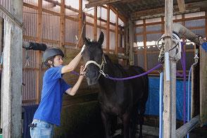 調教後は馬を休ませ、洗い場で馬を洗います