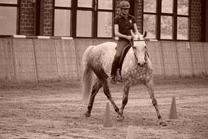 Pferde und Reiterin