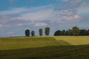 Hügelige Landschaft mit Bäumen am Horizont