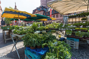 Kräuter-und-Pflanzen-auf-dem-Wochenmarkt