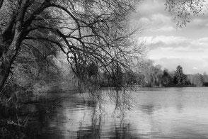 Trauerweide am See. Äste neigen sich ins Wasser