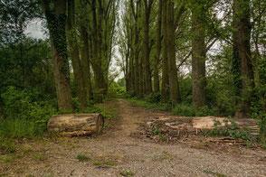 Baumstaämme liegen auf dem Waldweg
