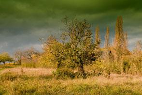 Bäume und Wiese im Herbst