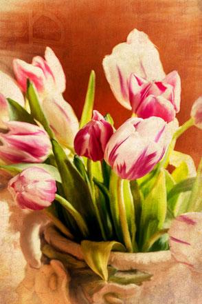 stillleben-tulips-tulpenstrauss-weiss-lila-makro-painting-II