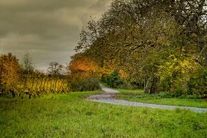Naturwanderweg im Herbst