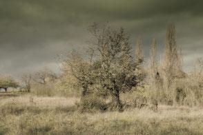 Bäume und Wiese im Herbst vintage
