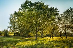 Belaubte Bäume und grüne Wiese im Sommer