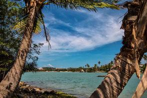 Blick durch Palmen auf Koh Samui © Jutta M. Jenning mjpics