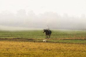 Einsamer Reiter im Nebel
