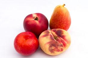obst-nektarine-pflaume-birne-weinbergpfirsich
