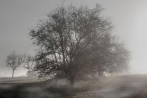 Baum im nebligen Herbst