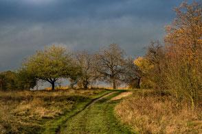 Bäume und Felder im Herbst