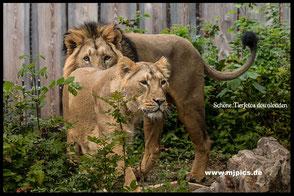im-zoo