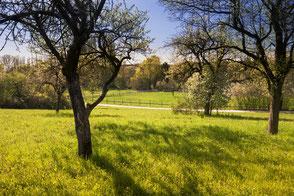Naturwanderweg im Frühling