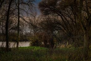 Bäume am Fluss im Herbst II