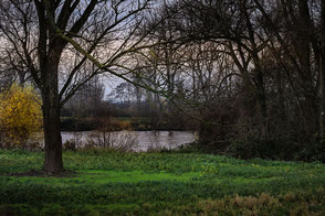 Bäume am Fluss im Herbst