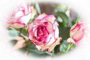 rosen-weiss-rosa-vignette
