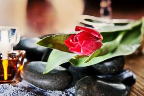 In Balance-Tulpe-auf-Hot-Stones
