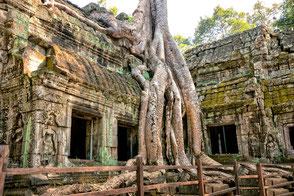 ta-phrom-von-wuergefeigen-umschlungner-tempel-kambodscha