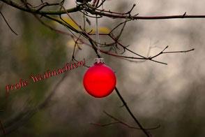 weihnachtskugel-rot-im-wald-frohe-weihnachten-saison-und-spruchkarten