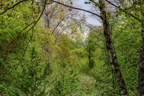 frisches-gruen-wald