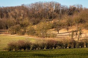 Naturwanderwege im März bei Sonnenschein