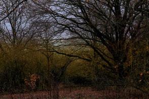 Kahle Bäume im Winter ohne Schnee