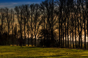 Bäume silhouttenhaft auf Wiese