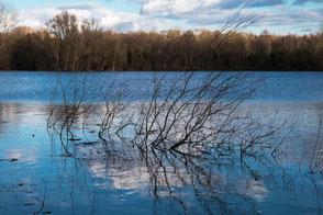 Geäst im blauen See