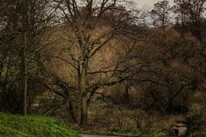 Kahle Bäume und Äste im Winter