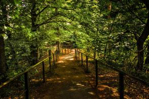 Spaziergang im schattigen Wald