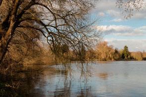 Trauerweide -Äste neigen sich in den See