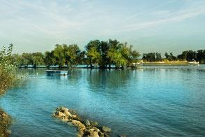 Boot auf dem Rhein-Rheininseln mit Bäumen