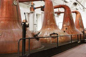 Spirits Schulung Whisky Gin Rum Experten Distillerie