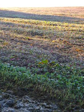Unten Frost, oben Sonnenschein: September