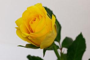 Blumensträusse und Gartenblumen