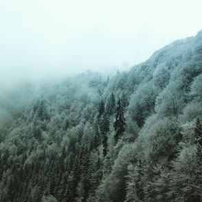 düsseldorf winter snow landscape wald schnee