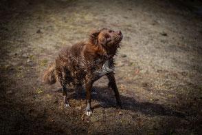 Tierfotografie, Haustierfoto, Hundeportrait