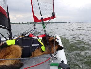 XCAT | Entspanntes Segeln auch mit Hund mit Schwimmweste auf dem Veluwemeer