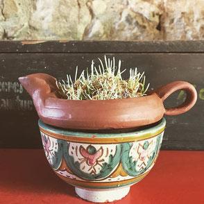 Germoir : disposez votre germoir en terre sur un récipient d'eau et disposé dessus des graines à germer (que vous aurez trempé pendant 24h) et regardez les pousser. n'oubliez pas de les rincer sous un filet d'eau chaque jour.