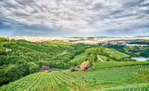 Weintrauben aus herrlichen Lagen keltern wir in unseren Weinkellern zu Weinen in höchster Güte.