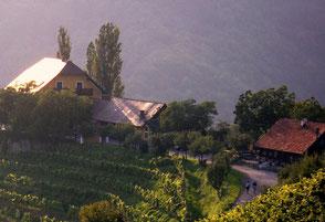 Der Kitzeckmüller wird von der Familie Temmel geführt und verfügt über einen urigen Buschenschank mit atemberaubendem Ausblick.