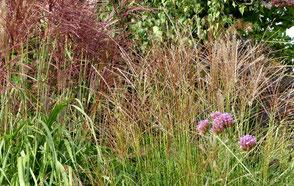 Hier im Vergleich: rotes 'Malepratus' gegen weiße 'Kleine Fontäne' als Pärchen gepflanzt