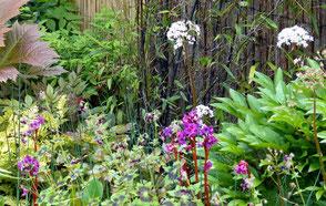 Bevor sich die Blätter zeigen, erscheint im Mai die weiß-rosa Blüte auf langen Stielen