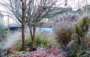 Wintersilhouette vom Pennisetum Federborstengras
