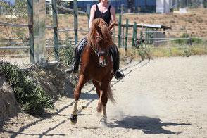 P.R.E. Verkaufspferde aus Spanien