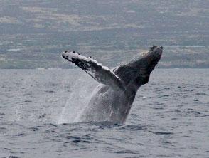 クジラウォッチ
