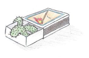 Kaktustierchen