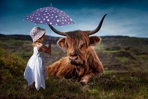 Mädchen schützt Calloway-Rind mit Regenschirm