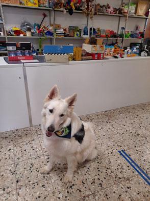 weißer Schäferhund vor Ladetheke mit Futterspenden
